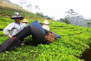 Lai Châu: Đưa kinh tế nông nghiệp phát triển bền vững
