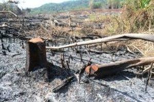 Khởi tố các đối tượng phá rừng Quảng Sơn