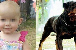Bé 1 tuổi bị chó tấn công tử vong và bài học đau lòng