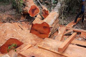 Vườn quốc gia Yok Đôn liên tục bị tàn phá nghiêm trọng
