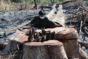 Đăk Nông: Khởi tố 5 đối tượng chặt phá hàng chục hecta rừng