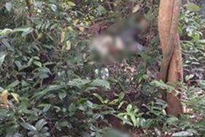 Lạng Sơn: Bàng hoàng phát hiện thi thể 2 bố con không còn nguyên vẹn khi đi lấy mật ong rừng