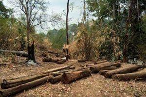 Phát hiện thêm một vụ hủy hoại rừng ở Vườn Quốc gia Yok Đôn