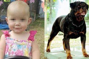 Được mẹ đưa về nhà ngoại chơi, bé gái 1 tuổi bị chó nhà hàng xóm cắn tử vong