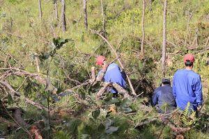 Bắt 5 người tham gia hủy hoại hơn 14 ha rừng