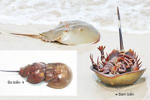 Cảnh báo ngộ độc thực phẩm do ăn so biển