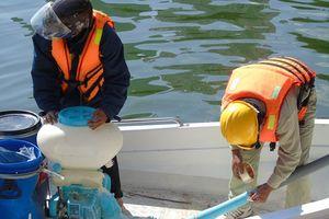 Rải chất hóa học Redoxy-3C vào hơn 80 hồ trong nội thành Hà Nội