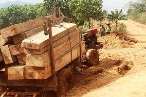 Đắk Lắk: Tạm giữ 5 đối tượng liên quan đến đoàn xe chở gỗ lậu trong đêm