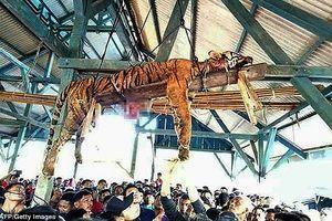 Nghi là 'sinh vật siêu nhiên', dân làng đâm chết hổ quý rồi treo xác lên trần nhà