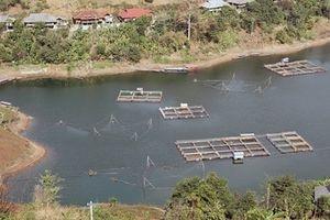 Sơn La xây dựng thương hiệu cho đặc sản cá sông Ðà