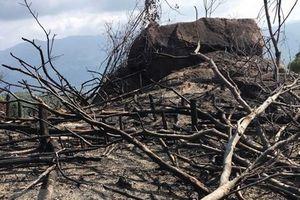 Gia Lai: Xảy ra 130 vụ phá rừng chỉ trong hai tháng đầu năm