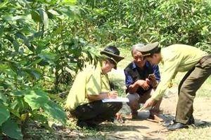 Khoanh vùng vị trí báo hoa ăn thịt đàn dê ở Quảng Trị