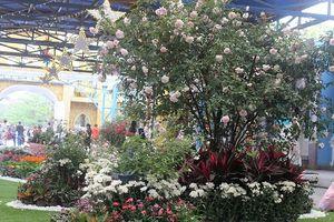 Cuối tuần dạo chơi Hồ Tây, ngắm vẻ đẹp của hơn 2000 cây hoa hồng Bulgaria