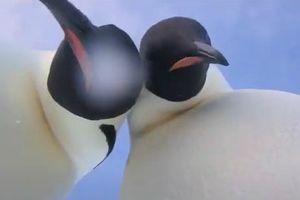 Chim cánh cụt Nam Cực nhặt được camera và tự quay clip