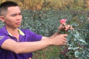 Làm giàu nơi đất khách: 9X trồng hoa hồng 'đút túi' 600 triệu đồng