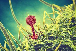 Virus bí ẩn trong hồ nước cứu mạng cụ ông 80 tuổi