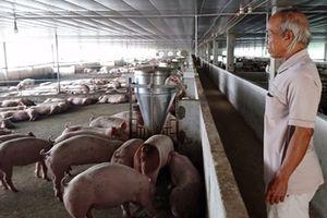 Cán bộ xã nghèo hùn vốn mở hợp tác xã chăn nuôi 'chui'