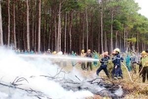 Cảnh báo cháy rừng ở Nam Trung Bộ, Tây Nguyên và Nam Bộ