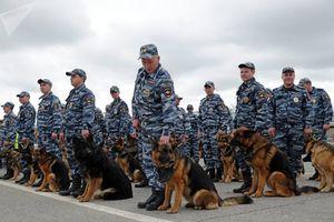 Bộ Nội vụ Nga tuyển chọn, huấn luyện chó đặc biệt như thế nào?