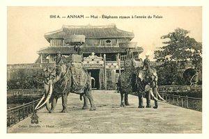 Tận mục dàn voi chiến hoành tráng của nhà Nguyễn