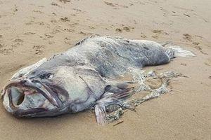 Úc: Xác 'quái vật' biển 'khủng' trôi dạt vào bờ biển khiến người dân hoảng sợ