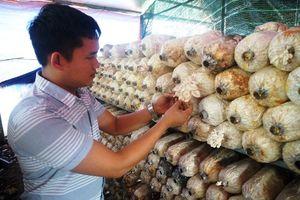 Chàng trai Sài Gòn kiếm 200 triệu đồng mỗi tháng từ nấm sạch