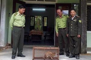 Giải cứu cá thể mèo rừng quý hiếm sau khi bị mắc bẫy