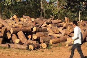 Bắt chủ tịch xã nhận hối lộ cho phá rừng cộng đồng