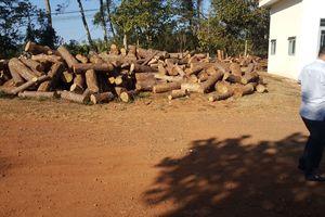 Chủ tịch xã nhận hàng trăm triệu đồng 'giúp' phá rừng