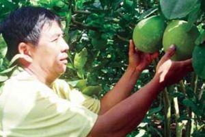 Tạm biệt cây lúa, trồng cây ăn trái, nông dân ĐBSCL rũ bùn đứng dậy