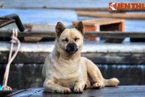 Ảnh 'độc' những chú chó cả đời lênh đênh sông nước ở Việt Nam