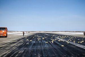Máy bay làm rơi hàng tấn vàng, dân đổ xô đi tìm mặc thời tiết -24 độ C
