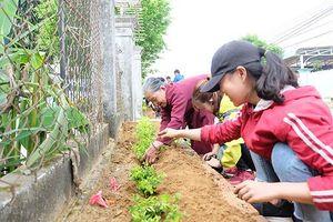 Hưởng ứng Ngày Chủ nhật xanh thanh niên Quế Sơn trồng 3.000 cây xanh