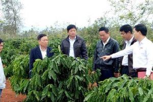 Dư nợ cho vay của Agribank Đắk Lắk tăng 560 lần