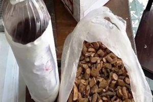 3 người tử vong ở Nghệ An do uống phải rượu ngâm lẫn rễ cây lá ngón