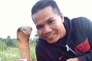 Chuyên gia bắt rắn bị hổ mang chúa cực độc cắn tử vong