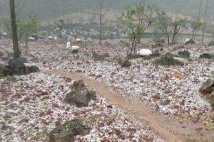 Cao Bằng: Bất ngờ có mưa đá, kèm lốc xoáy gây thiệt hại 1,2 tỷ đồng