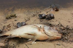 Đi tìm thủ phạm đầu độc hồ nước lớn nhất thủ đô, từng sạch nhất châu Á