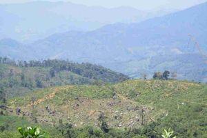 Bình Định: Cần làm rõ nhiều diện tích rừng An Lão bị khai thác trái phép