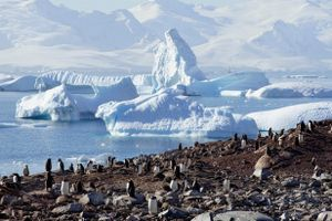 Kỳ vĩ Nam Cực: Chim cánh cụt, hải cẩu và sông băng