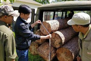 Lâm tặc ở Lâm Đồng dùng ô tô cũ, biển số giả để chuyển gỗ trái phép