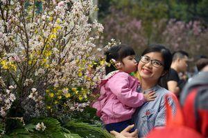 Người dân Thủ đô nô nức ngắm hoa Anh đào Nhật Bản bên hồ Gươm