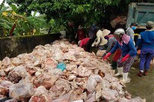 Phát hiện hàng trăm kg thịt gà bốc mùi hôi thối chuẩn bị tung ra thị trường