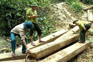 Phá rừng – 'phá' luôn niềm tin
