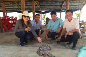 Huế: Liên tiếp giải cứu nhiều cá thể rùa quý hiếm 'đi lạc' vào bờ