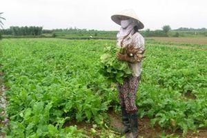 Huyện Phúc Thọ (Hà Nội): 100% xã đạt chuẩn nông thôn mới