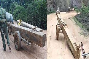 Đình chỉ công tác trưởng ban quản lý rừng vì để gỗ 'lọt' ra ngoài