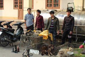 Mật phục bắt nhóm thanh niên trộm 6 con chó