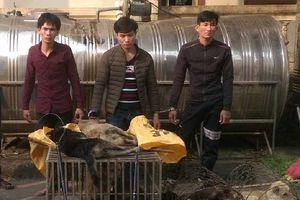 Đáng đời 4 'cẩu tặc' bị tóm gọn khi đang rao bán chó