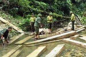 Sớm làm rõ, xử lý nghiêm vụ phá rừng phòng hộ ở Quảng Bình